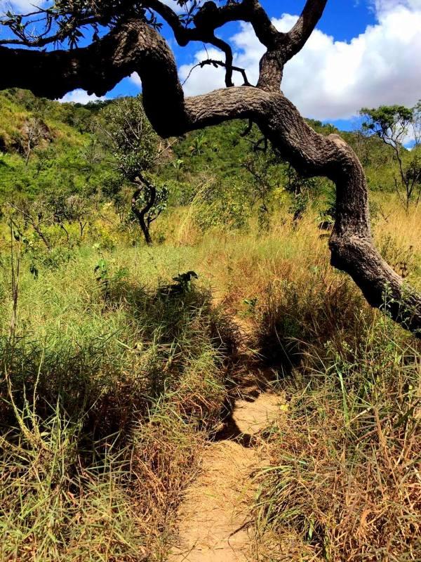 Caminho da trilha